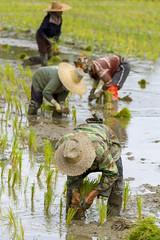 ChiangRai_7328 (JCS75) Tags: canon thailand asia asie chiangrai thailande
