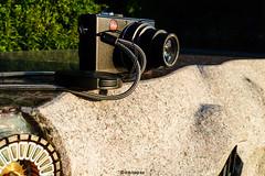 Leica # 102_PANA # Panasonic TZ10 - 2011 (irisisopen f/8light) Tags: panasonic tz10 digital farbe color irisisopen