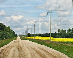 Road by canola field, Manitoba (Across & Down) Tags: rivers manitoba july canola crop agriculture yellow farm road