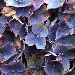 Day 6 14 Logan Botanic Garden blue flowers (bob watt) Tags: uk plants flower june canon scotland 7d 2016 18135mm loganbotanicgarden canoneos7d kirkcudbrightholidayjune2016