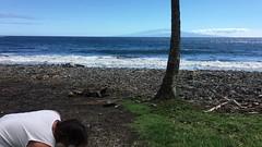 2016 Maui, Hawaii (EolianButterfly) Tags: tree hawaii video ray coconut clinton january maui hana clint 2016 landreth