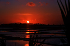 ... (danars) Tags: mare marsala saline sicilia stagnone tramonto