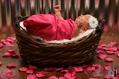 Pretty in pink (Never Infamous) Tags: pink baby girl infant newborn basket rosepetals photoshoot photography portraiture portrait portraits child children beautiful cute innocence flash strobist strobe nikon nikkor neverinfamous 50mm prime