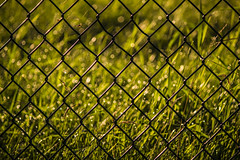 Beyond the Fence... (Mister Day) Tags: bokeh grasses fence morning summertime alberta green sunlight fences edmonton bokehsunlight webs