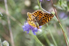 Farfalla al lago di Fimon (filippo.bassato) Tags: farfalla fly fimon lago lake natura vicenza veneto campagnaveneta filippobassato ali fiore