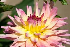 flower (futoshita) Tags: canon 400d 100mm macro f28 ef flower fleur