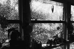 (jean_pichot1) Tags: sunlight silhouette wateringcan pots shadow frame hanging plants outside bright trees dark window