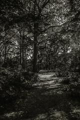 DSC_0394 (hosam alshanawany) Tags: lr lightroom nature norfolk va usa botanical garden d750 nikon nikkor 2485 af