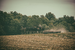 Kicking Up Dust (Off The Beaten Path Photography) Tags: amish plow work fields harvest farm offthebeatenpath horses horse mules mule farming human humans culture