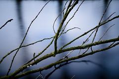 Branches . (david galliez) Tags: poselongue