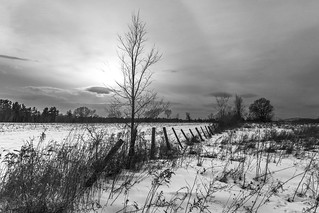 the fields in winter