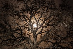 12-6-2014 full moon 014 (lezlievachon) Tags: