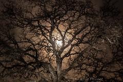 12-6-2014 full moon 014 (lezlievachon) Tags: