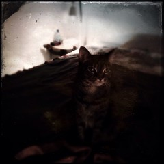 Chat mditatif... (woltarise) Tags: chat couleurs soir chambre carr rverie iphone5 hipstamatic ctypeplate tinto1884