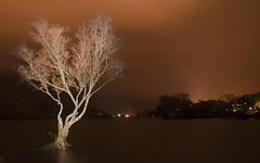 Wind In the Willow (Paul Sivyer) Tags: llanberis llynpadarn paulsivyer wildwalescom grahamstree