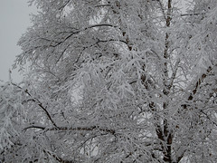 Winter's First Snow (Lunken Spotter) Tags: trees winter columbus ohio snow cold tree ice frozen frost branch suburban snowy branches suburbia frosty oh suburbs suburb icy wintertime snowfall treebranch snows wintry franklincounty centralohio