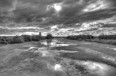 After the rain (ArtGordon1) Tags: uk england rain landscape blackwhite hampshire stormclouds thenewforest davegordon davidgordon artgordon1 daveartgordon daveagordon davidagordon