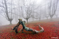 fallen branches kissing in forest (Mimadeo) Tags: morning trees light mist love nature wet leaves misty fog mystery forest landscape leaf moss haze spain kiss kissing couple branch natural magic foggy dry valentine lovers spooky fairy fantasy bark ethereal mysterious trunk mystical hazy magical euskalherria euskadi basquecountry paisvasco gorbea