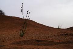 Red Sand (haidarism (Ahmed Alhaidari)) Tags: sky plant sand desert سماء صحراء رمال نبات