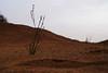 Red Sand (haidarism (Ahmed Alhaidari) Baaaack) Tags: sky plant sand desert سماء صحراء رمال نبات