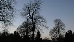 Rouen - Jardin des Plantes - Soir d'hiver - Soleil couchant (jeanlouisallix) Tags: trees sunset france seine landscape soleil lumire parks jardin des ciel arbres rouen maritime normandie soir parc paysages jardins couchant plantes haute patk