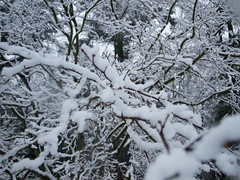 snowy web (pupsandmaps) Tags: winter snow tree nature snowy patterns branches treebranches branching snowytree snowybranches wintrynature