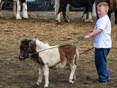 Scale models (Frank Fullard) Tags: street ireland boy portrait horse irish scale model candid small fair pony ballinasloe fullard frankfullard