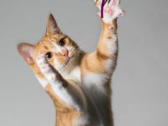 Irori (rampx) Tags: cat pentax action neko   irori miaw 645z