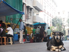 Mumbai Bombay India Indien South Asia Asien Maharashtra (hn.) Tags: street copyright dog india animal animals tiere asia asien heiconeumeyer indian hund bombay maharashtra mumbai indien tier southasia copyrighted 2014 in colaba indisch strase sdasien maharashthra tp201415