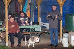 IMG_5879.jpg (peterrinzner) Tags: beagle sterreich niedersterreich biedermannsdorf beaglewiese