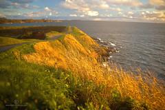 Helsinki Island (Denis Carbone) Tags: ocean sunset sea wallpaper grass finland island helsinki finnland sonnenuntergang insel cannon gras hdr oceansunset ozean