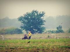 Farmer with Hand Tractor (Kyel21) Tags: birds farm fields farmer handtractor