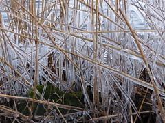 Icy, Slotermeer NL 2015 (Alta alatis patent) Tags: ice reeds slotermeer