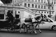 Carriage (Halibel14) Tags: vienna street city travel horses blackandwhite bw horse pen lumix photography austria holidays europe carriage euro streetphotography olympus panasonic vien 1442mm epl1