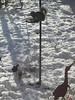 Breakfast time (bryanilona) Tags: snow garden squirrel seed feeder blackbird abigfave heronornament