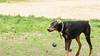 16-05-15_untitled_409 (Daniel.Lange) Tags: dog philadelphia dogs dogdayafternoon spado columbussquarepark