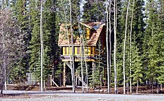 Grown up tree house - Alaska (JLS Photography - Alaska) Tags: home alaska america landscape cabin outdoor cottage treehouse funnyshots alaskalandscape