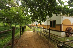 Green way   (yadhavan.c) Tags: trees green nature rural canon way singapore outdoor path farm perspective straight horseriding gogreen gostraight ckphotography yadhavancphotography