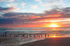 bombas-0061 (iedafunari) Tags: santa praia brasil mar barco gaivotas catarina amanhecer bombas canoa bombinhas