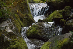 Water Flows Past a Moss Covered Rock (gleavesm) Tags: water dark virginia moss rocks stream falls trail hollow shenandoahnationalpark
