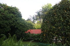 Visit to Singapore Botanic Gardens in Singapore  (May 16, 2016) (cseeman) Tags: flowers trees plants green singapore parks nationalparks greenspace urbanpark singaporebotanicgardens nationalparksboard nationalparkssingapore singapore2016