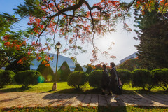 Graduation Season / 畢業季 (Cheng Yang, Chen) Tags: graduation nthu 新竹 streetshot 畢業 街拍 清大 鳳凰花 碩士 nationaltsinghuauniversity