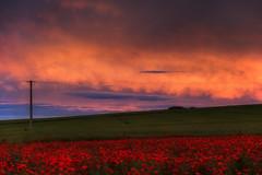 Felder (Rainer Schund) Tags: sunset nature abend nikon sonnenuntergang natur felder minimal poppy mohn mohnfeld minimalistisch nikond700 naturemasterclass natureexploring