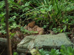 Vermin (wrj95) Tags: family two snake pair copperhead posionous