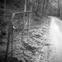 Smeltzer Lane, Desert Lake, Ontario (Richard Wintle) Tags: foma fomapan 200 adox adonal film 120 mf mediumformat voigtländer brillant v6 skopar 75cm f45 square 6x6 blackandwhite bw monochrome desertlake southfrontenac ontario canada