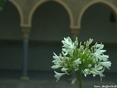 L_000321 (hans03) Tags: blumen blüte gärten der welt berlin berlinmarzahn
