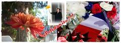 France!  Franciaorszg! Solidarite! Nizza!( NICE) (Katalin Rz) Tags: france solidarity tragedy nizza flowerfrancenizzatragedysolidarity