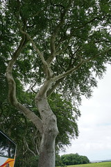 DSC05117 (raehyunie) Tags: dark hedges ireland