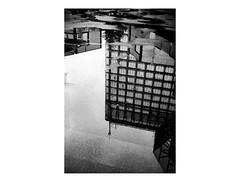 160130_PEN_EE-2_ilford-delta100_00033_ (A Is To B As B Is To C) Tags: aistobasbistoc belgi belgium antwerpen antwerp oudaan politietoren renaatbraem architectuur architecture honeycomb reflection water rain olympus penee2 analog bw ilford delta 100asa