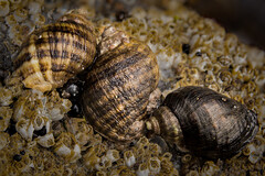 The three molluscateers. (robn848 - mostly dormant) Tags: shortsands
